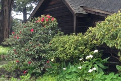 mendocino-bed-breakfast-gallery-twenty-two